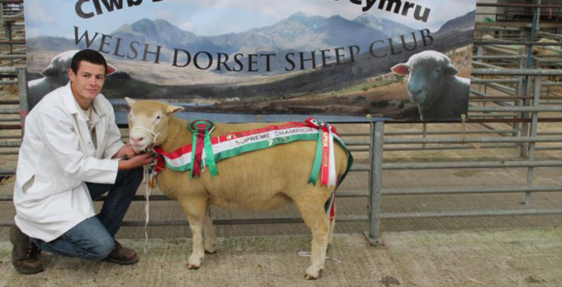 The Dorset Horn Sheep Breeders' Association