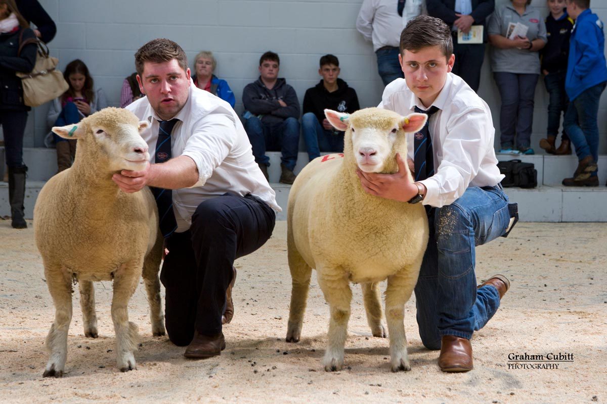 TJ Magee & Stevie Lyons showing ewe lambs