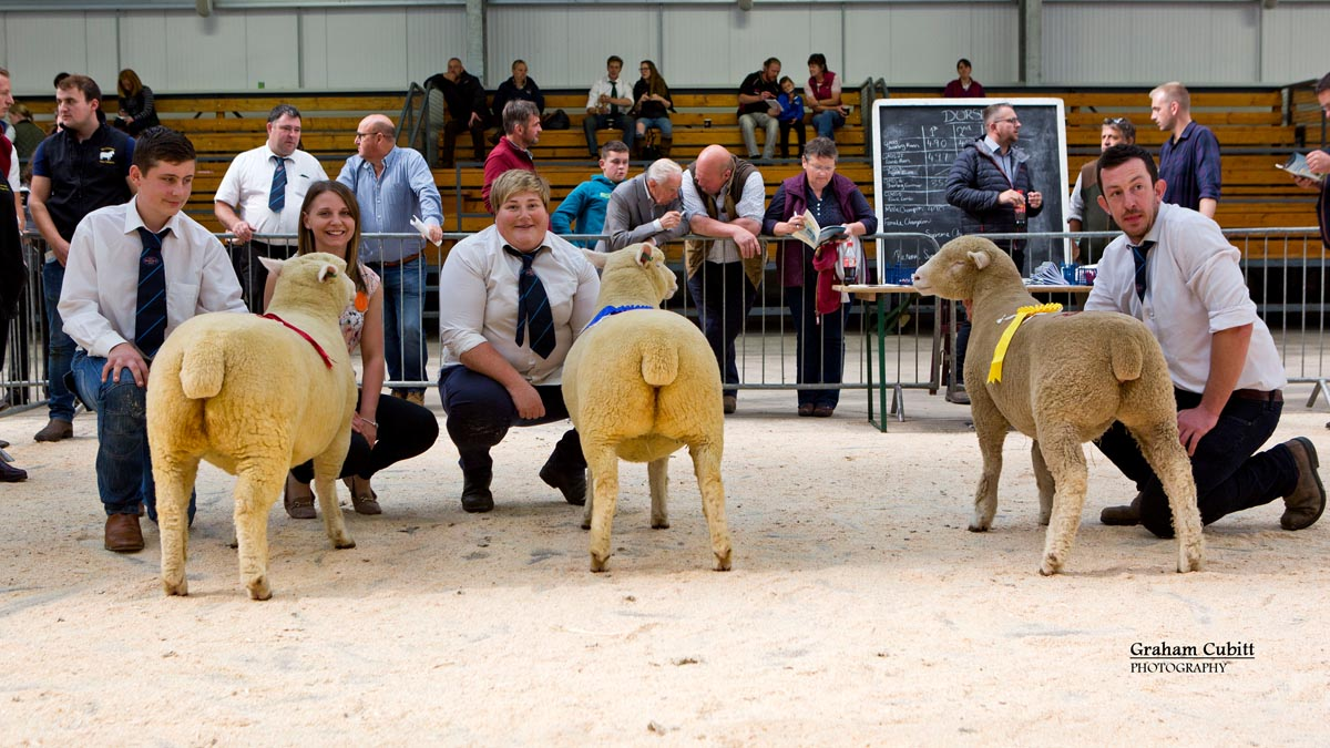 TJ Magee, Karen Carson, Ben Lamb, Judge Sian Downes along with the 1st, 2nd and 3rd placed ewe lambs
