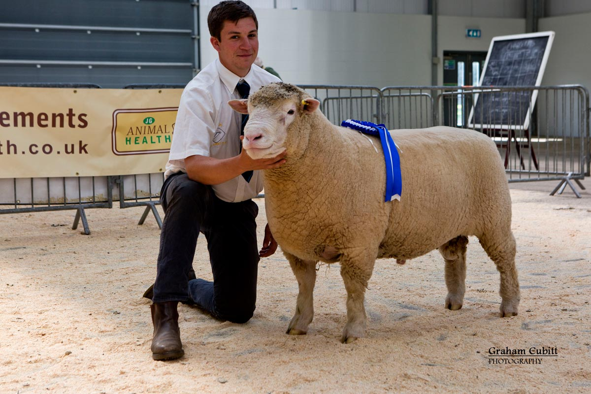 Reserve Champion (Huish Flock)