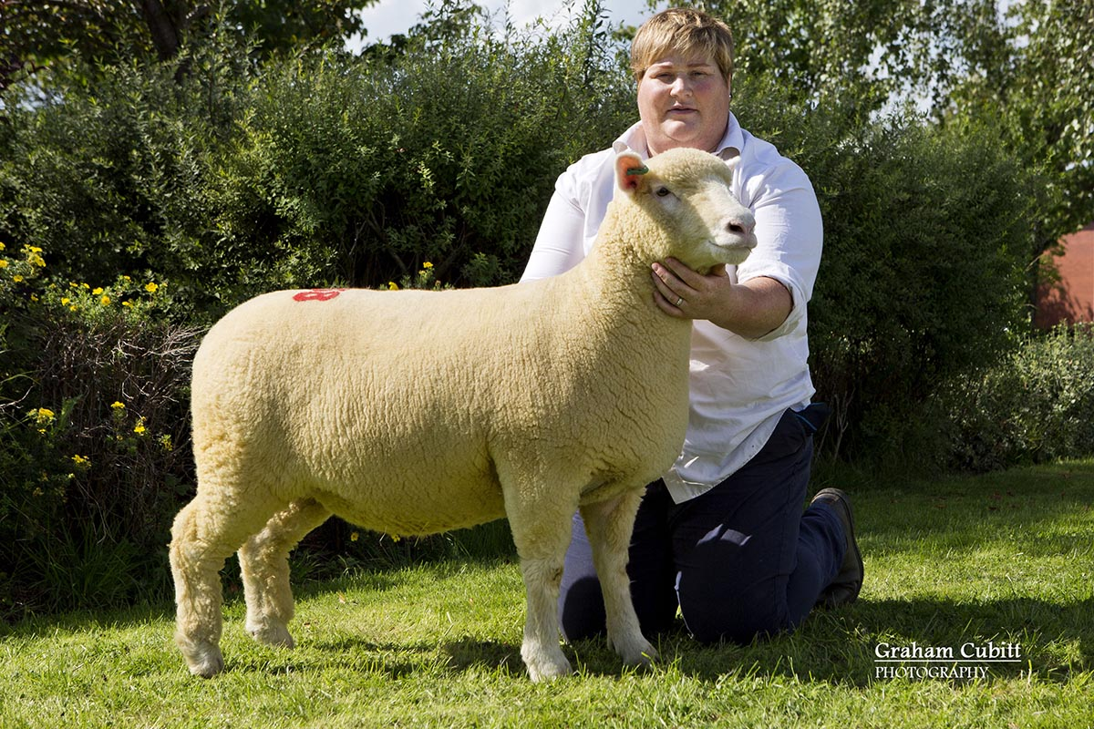 Karen Carson with the Supreme Champion from Graham Cubitt's Kildowney Flock