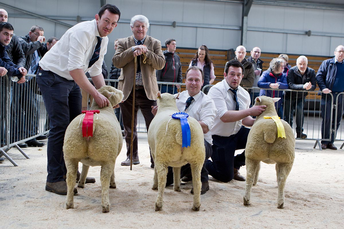 Centre – William Carson with the 2nd placed shearling ewe, Downkillybegs A102