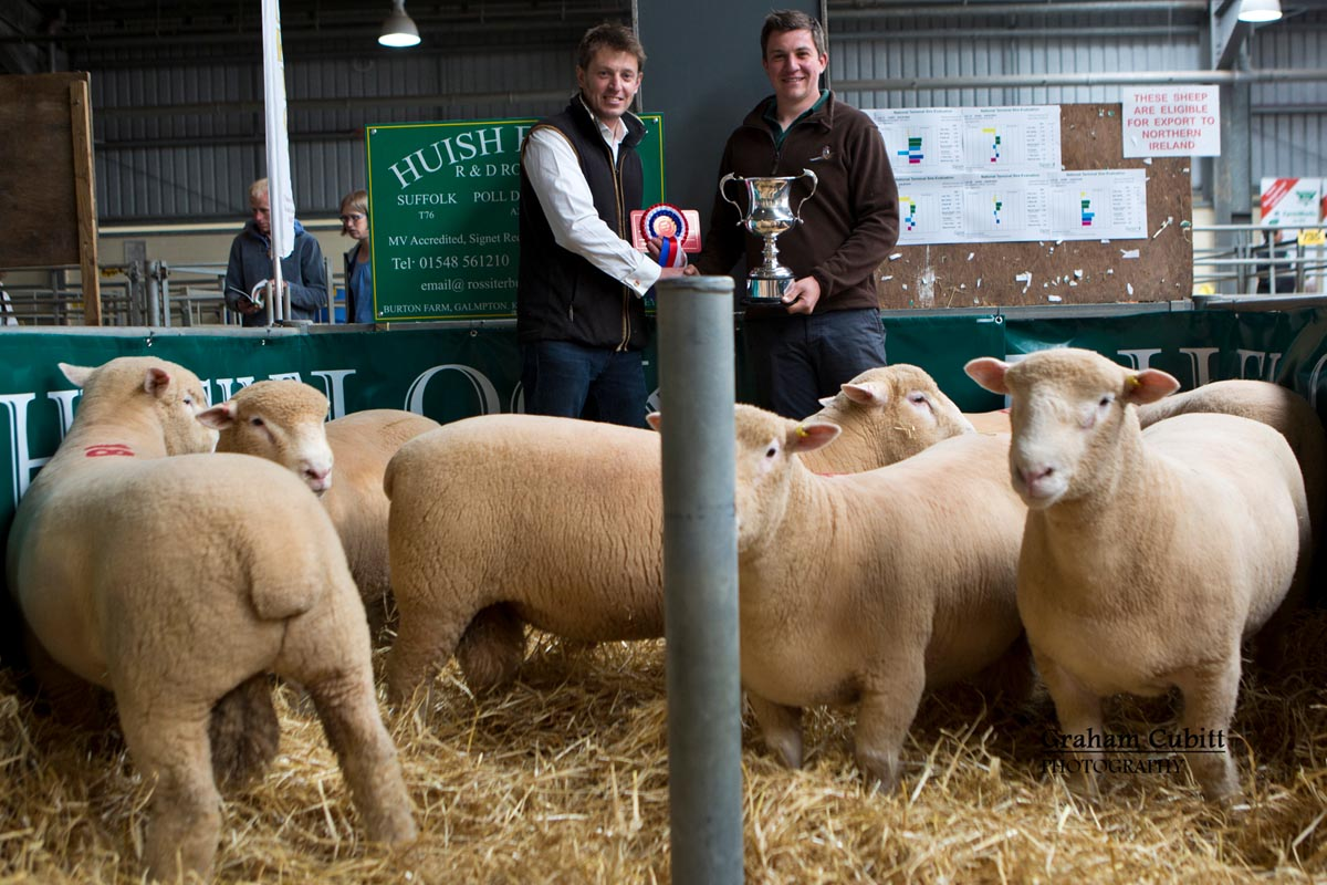 R & D Rossiter's Huish Flock, Best pen of rams