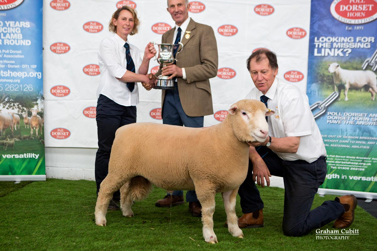 Best Ram Lamb or Shearling Ram within Signet
