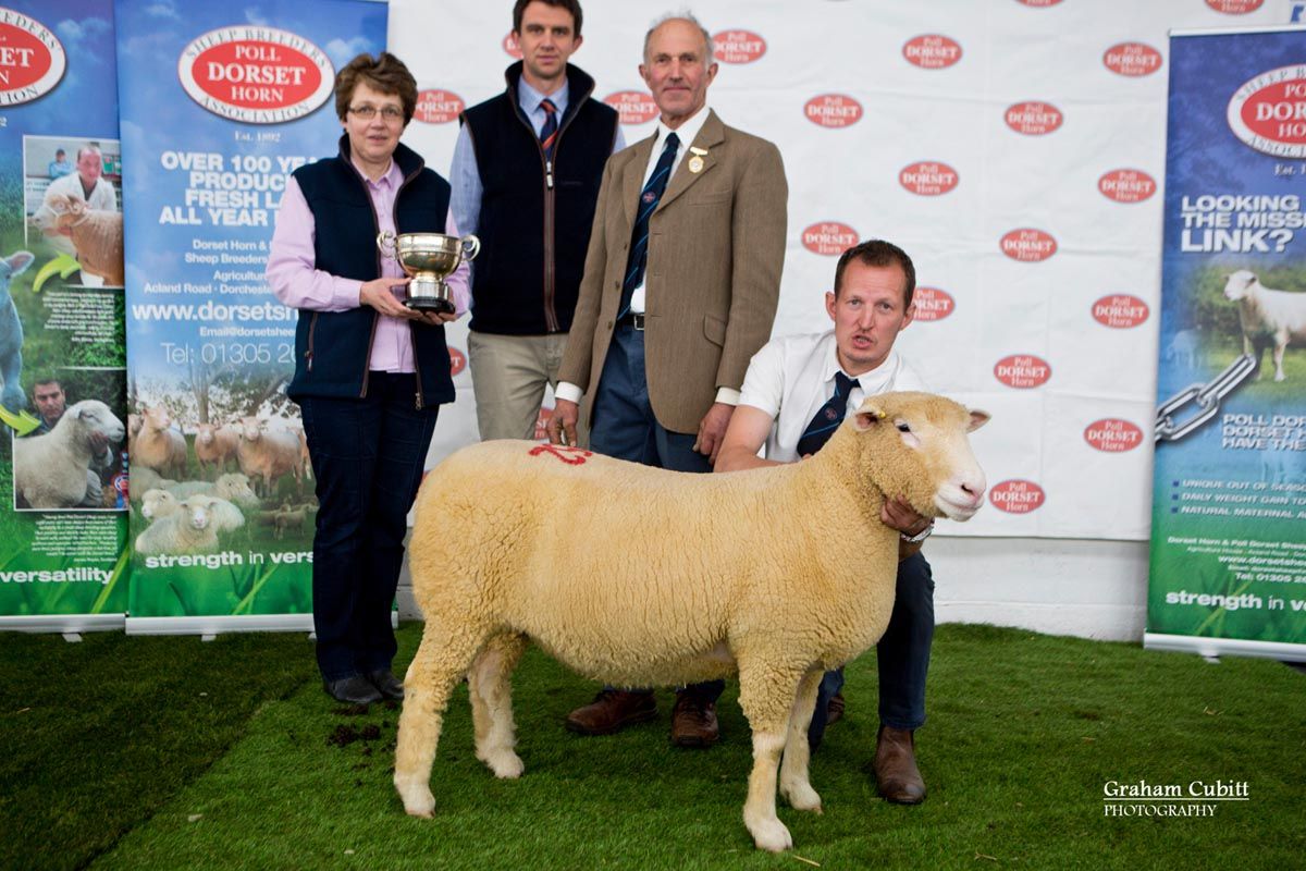 Best Shearling Ewe