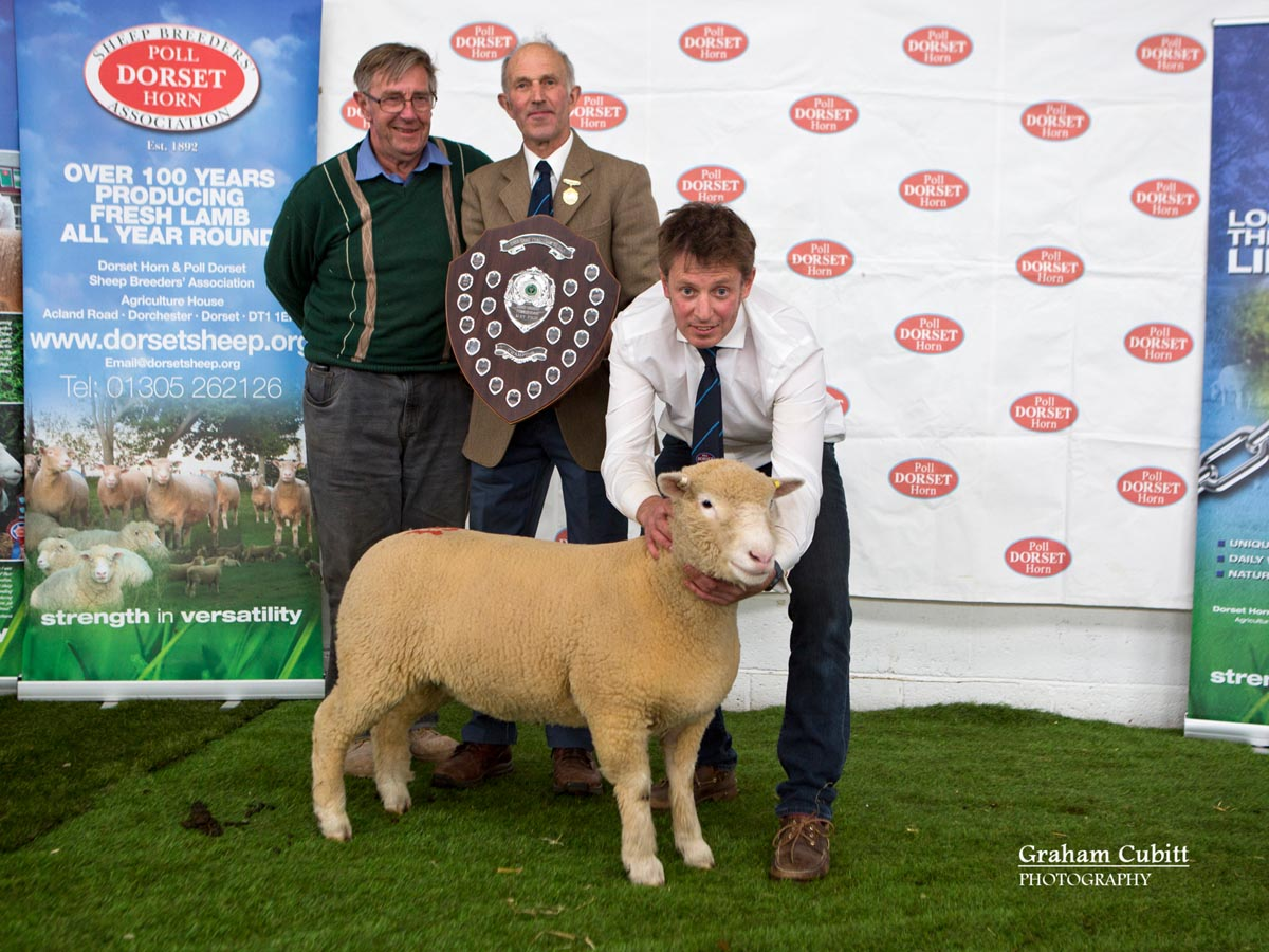 Best Ewe Lamb or Shearling Ewe within Signet