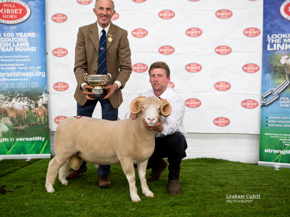 Best Single Horn Ram Lamb