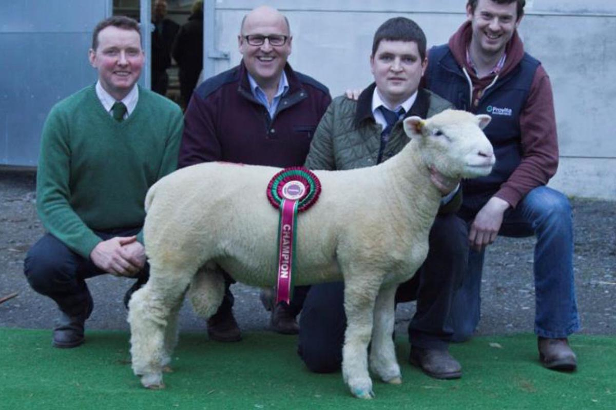 Ram Lamb winner with R Currie (Judge), R Hill (Owner), S Caldwell and K Donnelly (Provita)