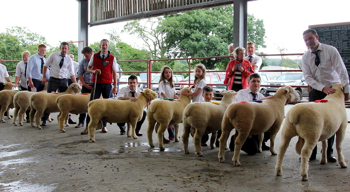Ram lamb class final line up