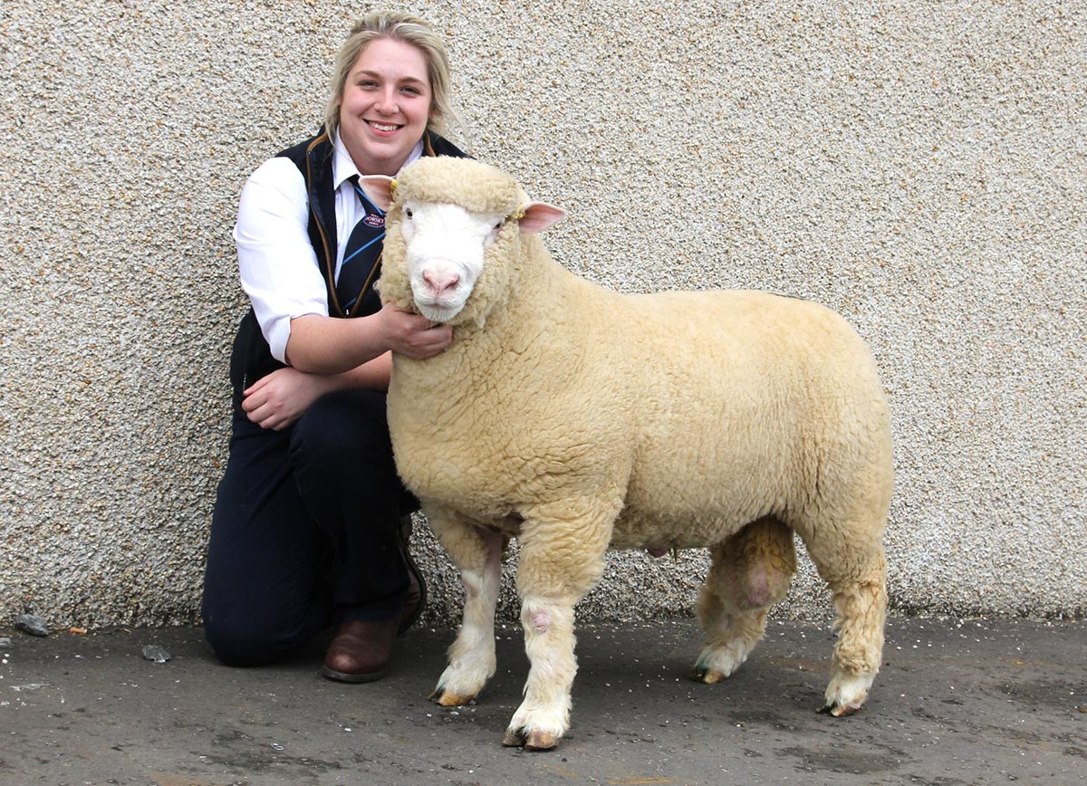 Laura Weir with Shearling Ram