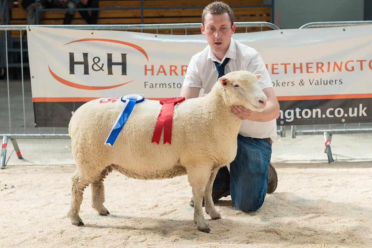 Joe Larder with the Reserve Champion female