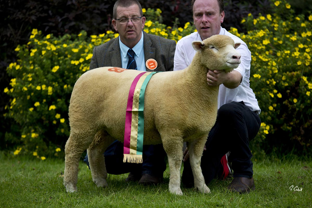 William Carson, and Judge, Geraint Jones with the Supreme Champion