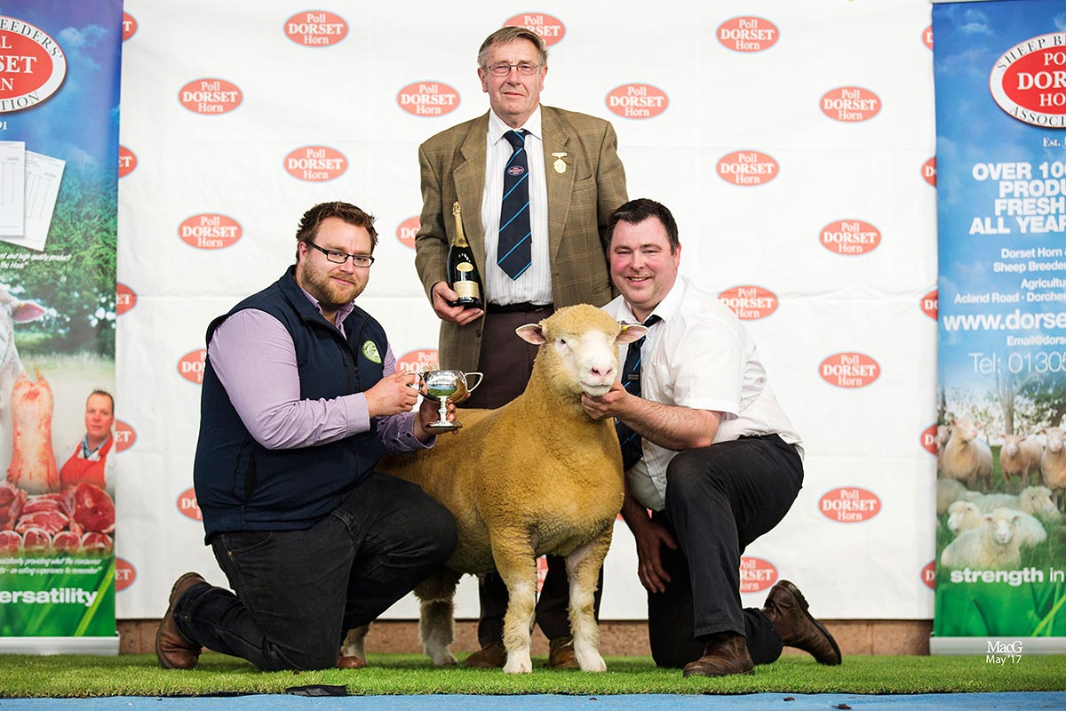 Best Single Poll Ram Lamb, sponsored by Waitrose, Thomas Wright's Ballytaggart Zebedee Z1735, with from left Dylan Laws, Waitrose, Edwin Pocock, President and Thomas Wright