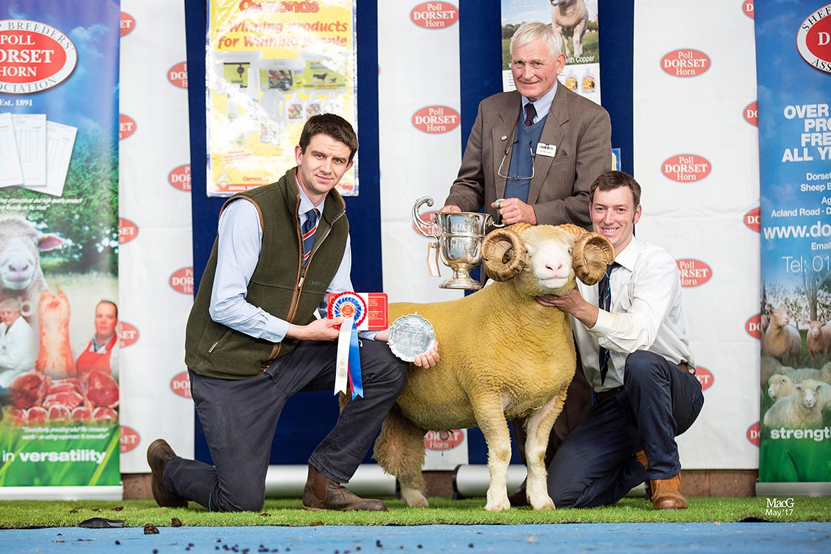 Best Horn Exhibit, sponsored by Mr Simon Dunk, Osmonds, and Best Shearling Horn Ram, sponsored by Kivells, V P, M & A Care's Burhos Xtravagent, with from left Russell Steer, Kivells, Mr Simon Dunk Osmonds and Matthew Care