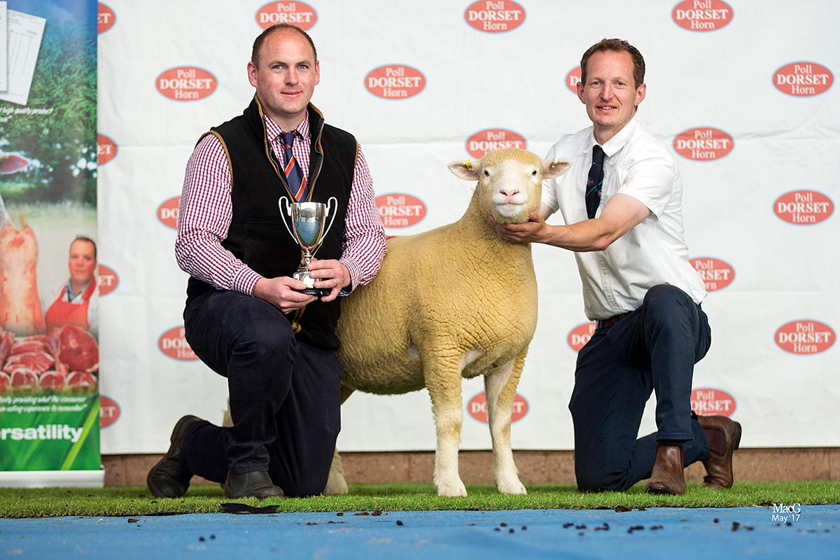 Best Shearling Ewe, sponsored by Kivells, David Lewis' Pembroke Xeter, X73, with from left Mark Davis, Kivells and David Lewis)