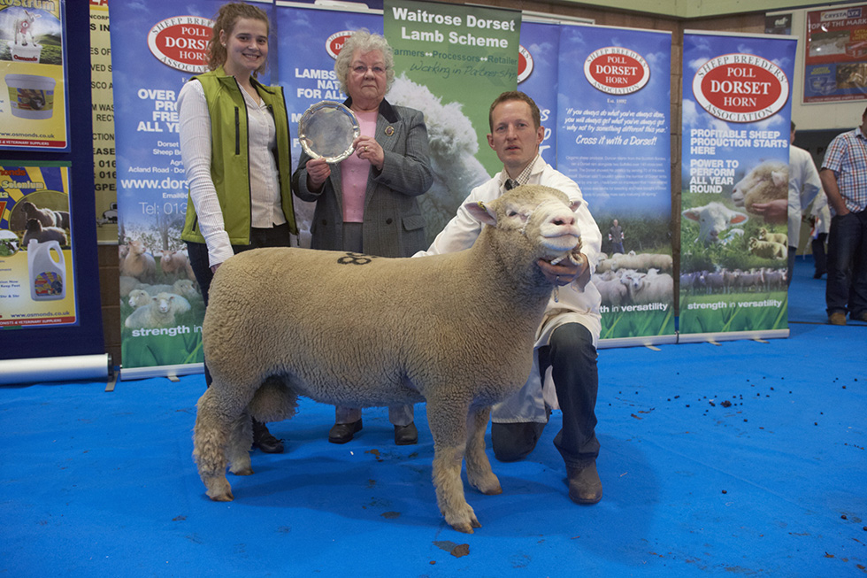 May Fair 2013 - Shearling Poll Ram