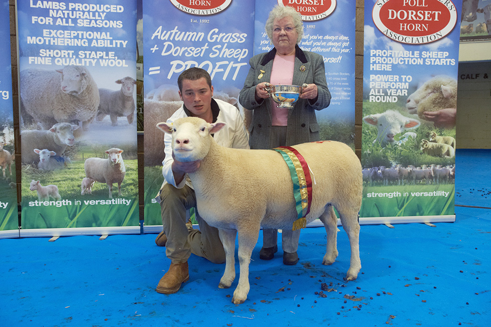 May Fair 2013 - Shearling Ewe