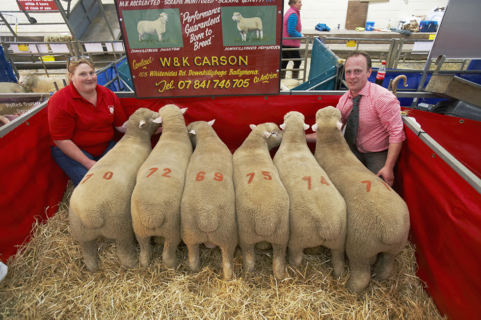 William and Karen Carson with their pen of rams