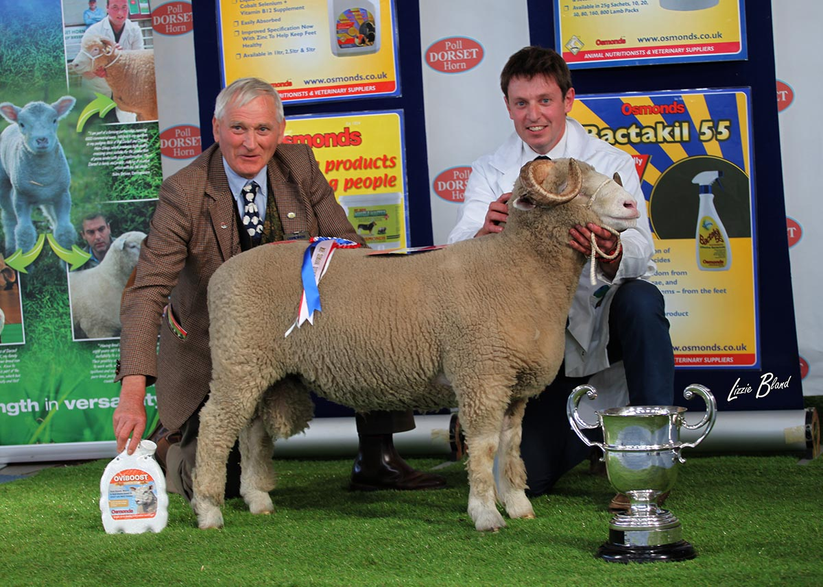 Best Horn Exhibit sponsored by Simon Dunk, Osmonds, & Best Single Horn Ram Lamb, Staverton Xose X1810 with Simon Dunk, Osmonds (left) and Tim Pratt (right)
