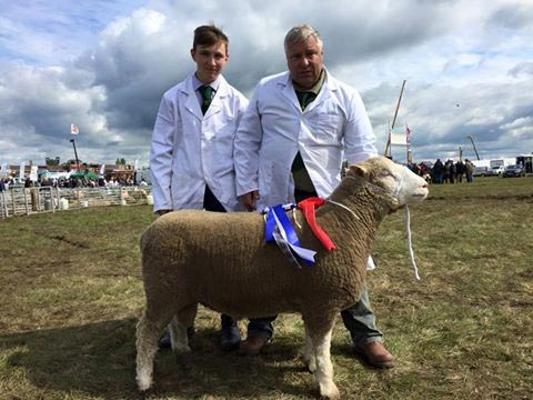 Reserve Breed Champion – Sherborne Ultimatum