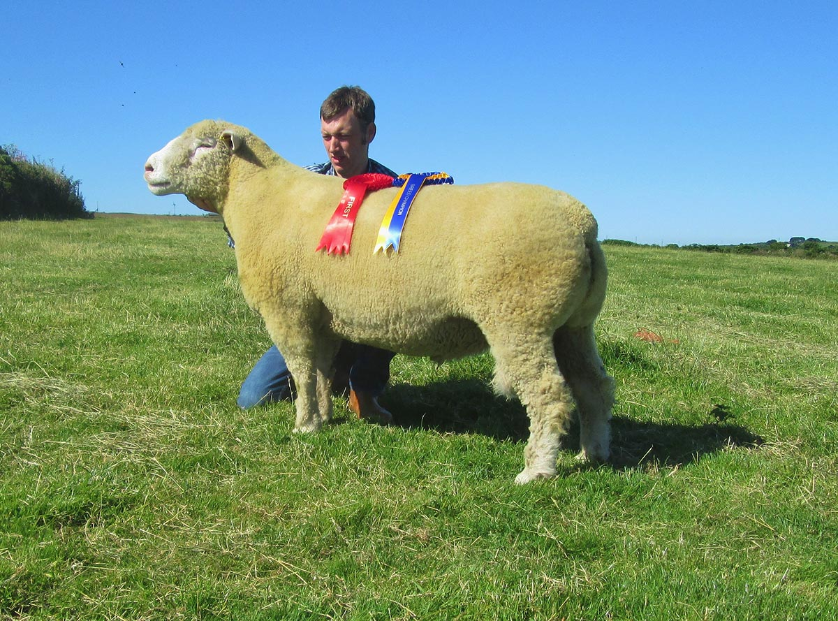 Matthew Care with the Reserve Breed Champion