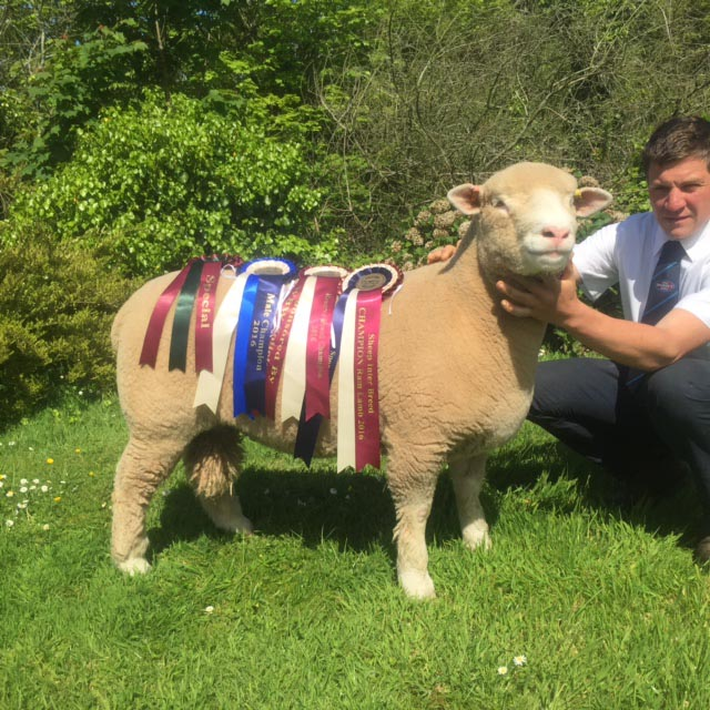 Rich Rossiter with Interbreed Champion Ram Lamb, Huish eXcalibur X9323,