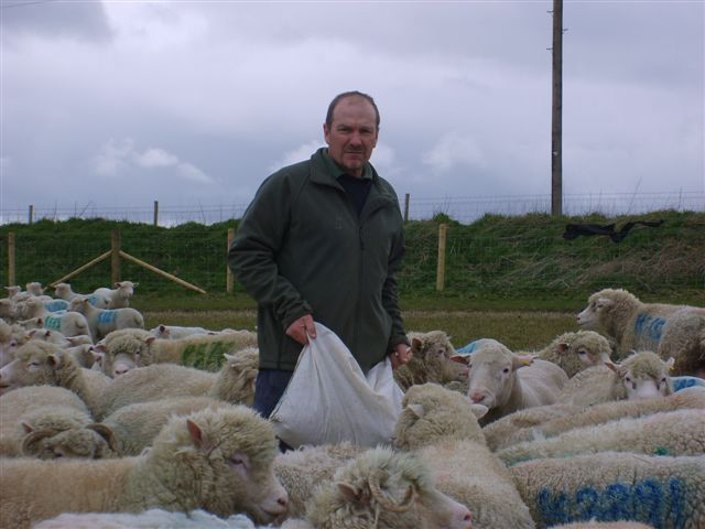 The Blackhill flock, owned by Jim Dufosee of Warminster,