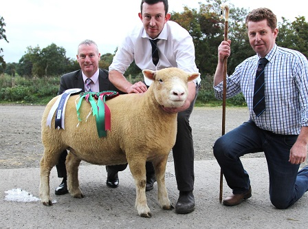 Show & Sale Champion with breeder, Ben Lamb, Judge, Gary Henderson, & Seamus McCormick from Danske Bank