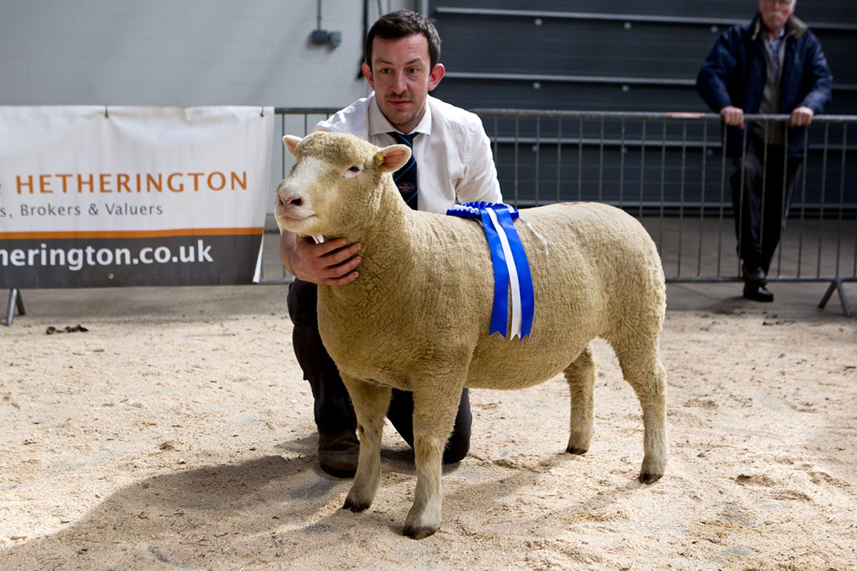 Ben Lamb with the Reserve Champion, Richhill A Star