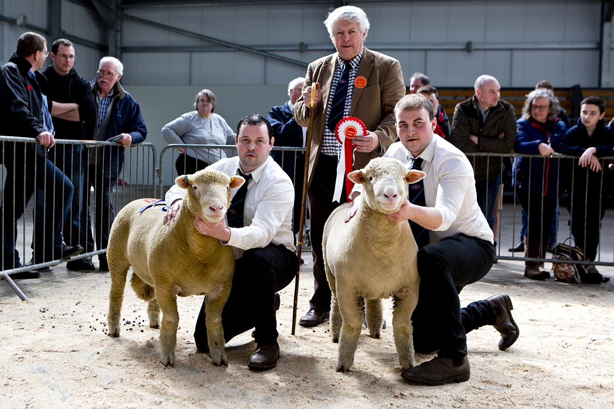 From left Seamus Mullan with the Reserve Male Champion, Islaharnan Bruno, Rowland Davies, Judge, and James Robson with the Champion, Ballyhamage Braveheart