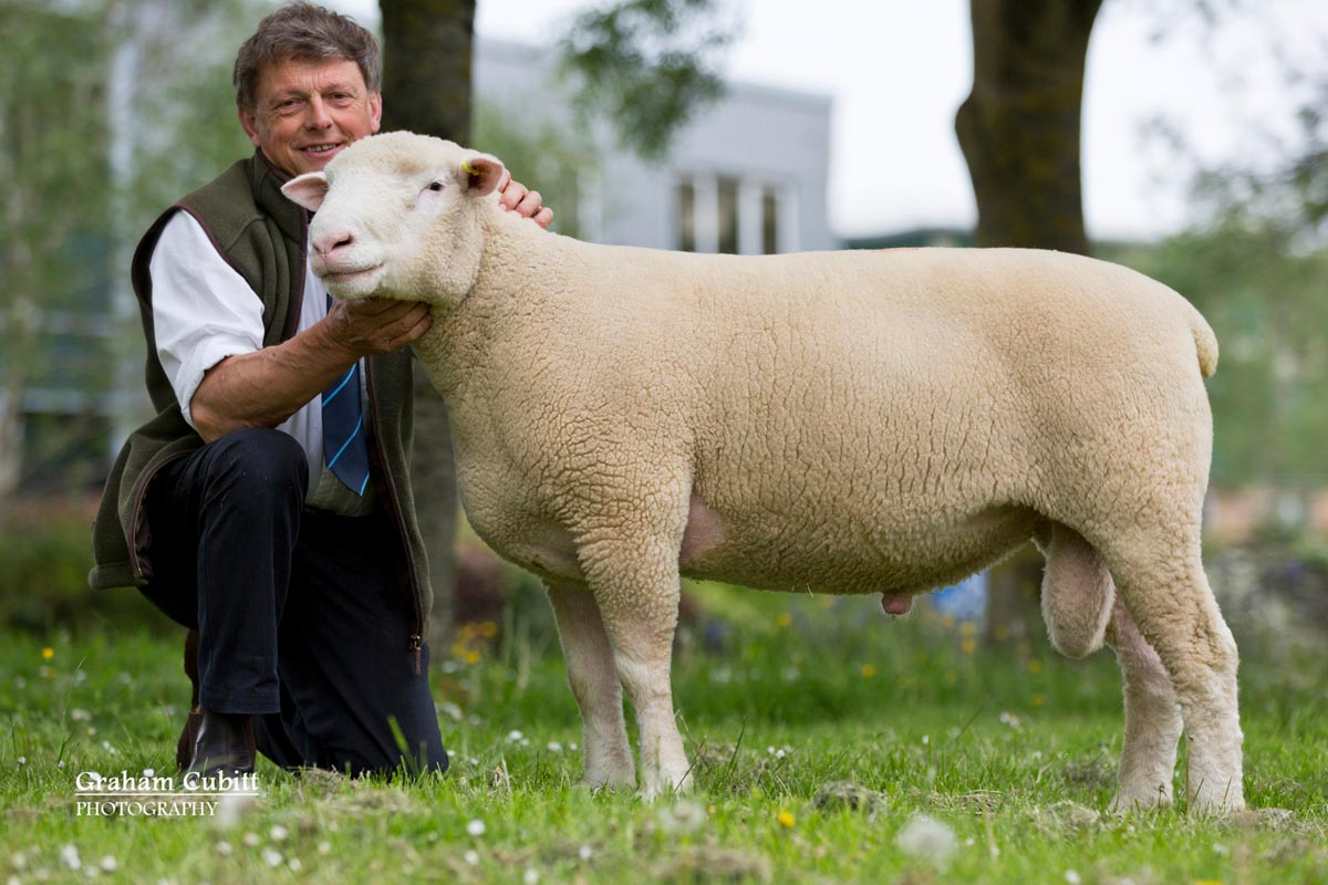 Francis Fooks with Poorton A373, selling to 2,300 gns.